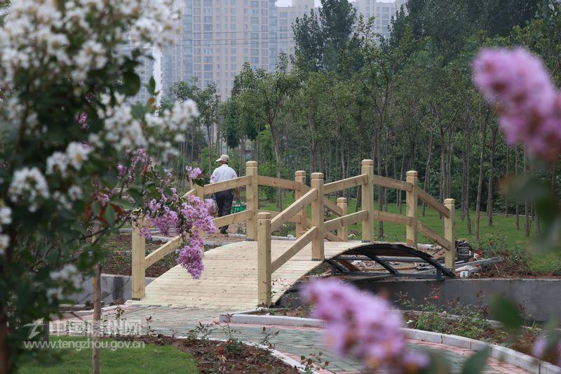 北辛街道:共创森林城市 建设美好家园